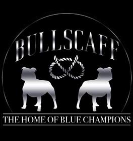Bullscaff logo
